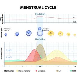 30 x David Ovulationstest Streifen 10 miu/ml LH ovulation test